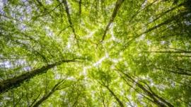 Environment Indicators Resized