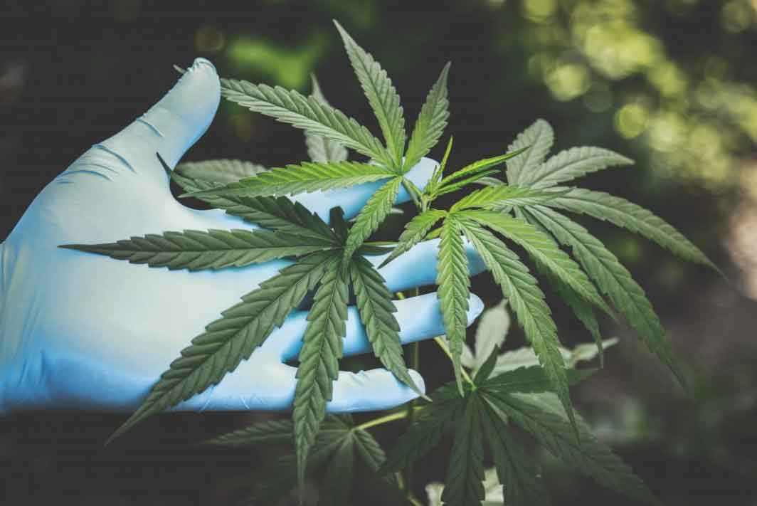 Alabama Legislature Continues to Consider Medical Marijuana. Is it to Help People, or Make Money?